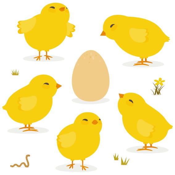 鶏のヒナと卵
