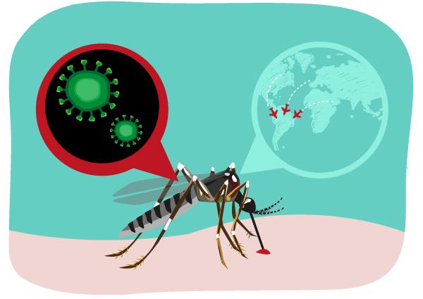 <ハザードラボ> 感染症学会「ジカ熱」治療が受けられる専門医療機関を公表