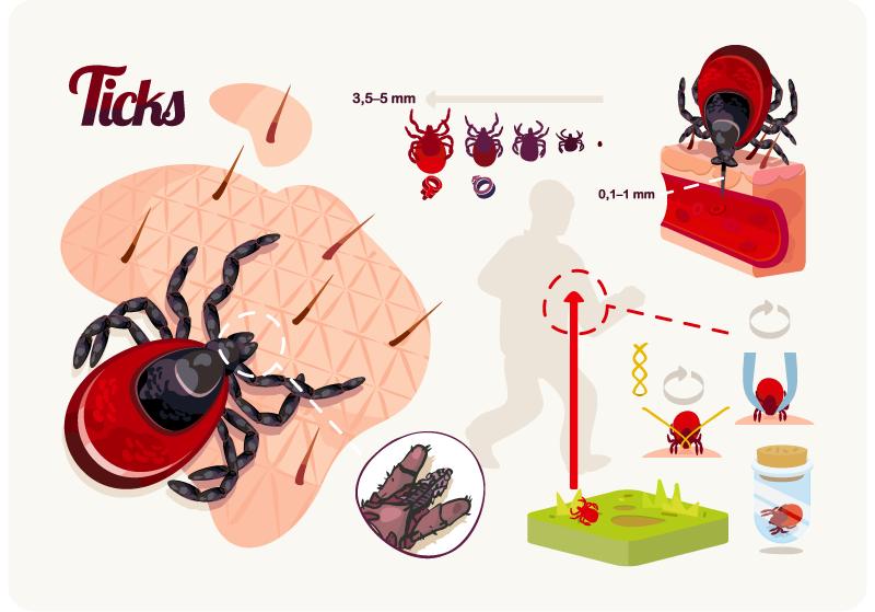ticks-マダニ感染症