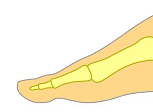 普通の足の指