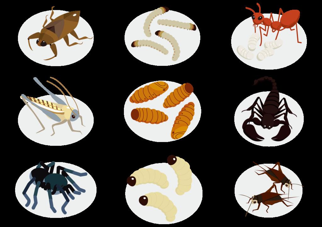 食べられる昆虫のイラスト
