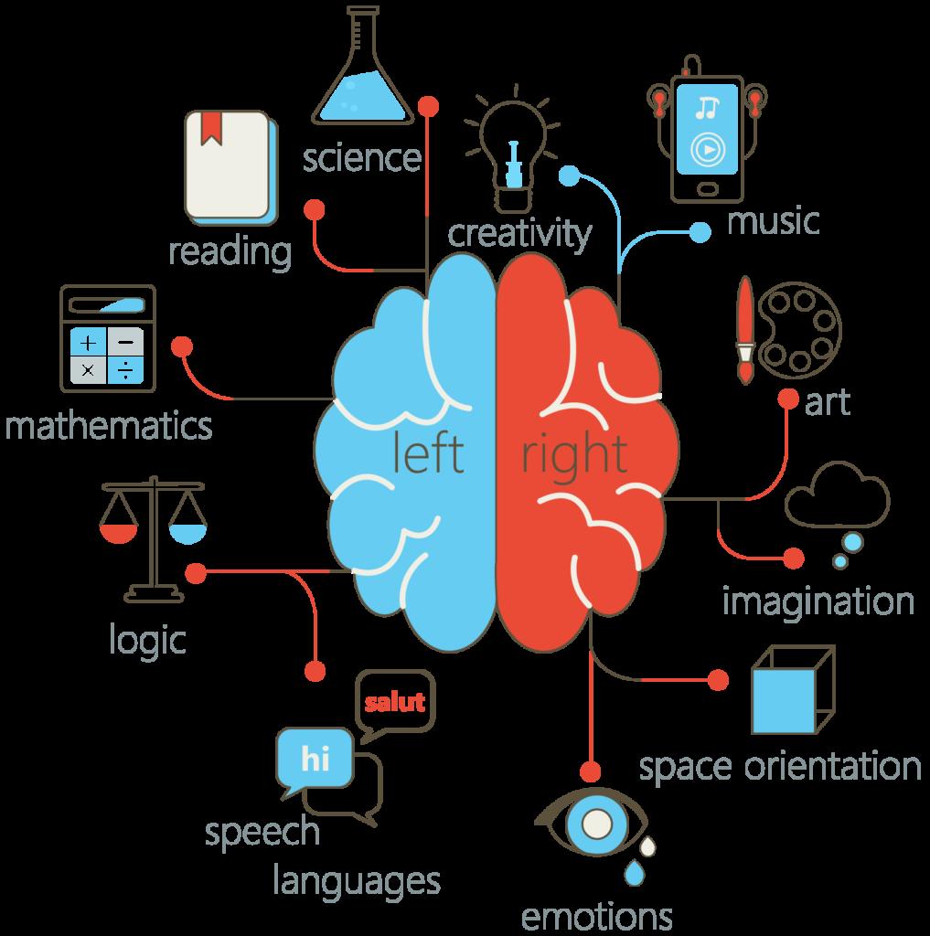脳の言語野