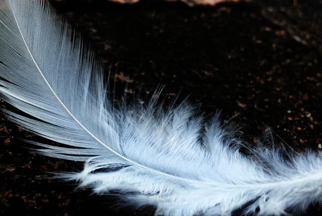 <愛知県>死骸見つけたら連絡を 鳥インフル、注意点は