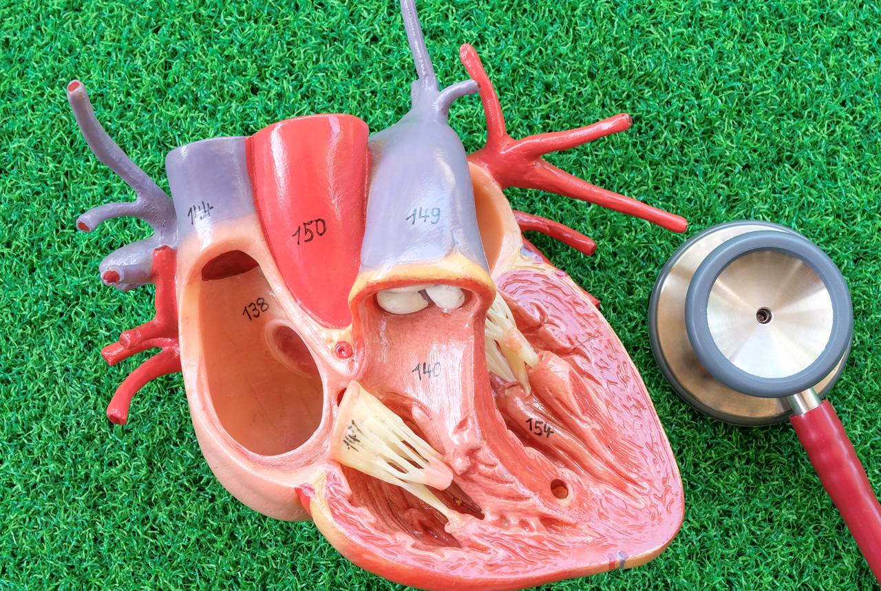 <岡山県>小児医療に「プレパレーション」 検査や治療法を分かりやすく説明