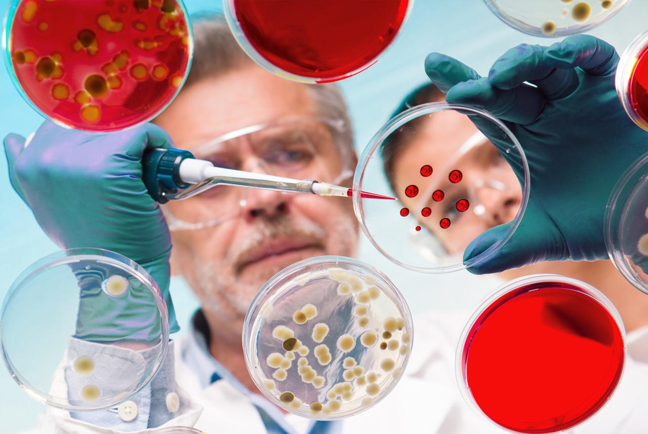 WHO、最も危険な細菌を公表 薬剤耐性の12種類
