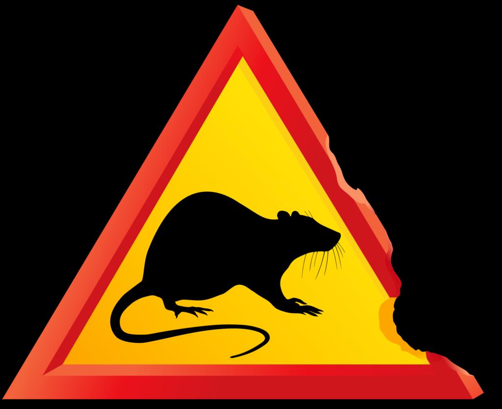 感染症の感染源のマウス(ネズミ)