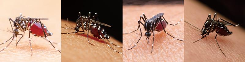 蚊媒介感染症