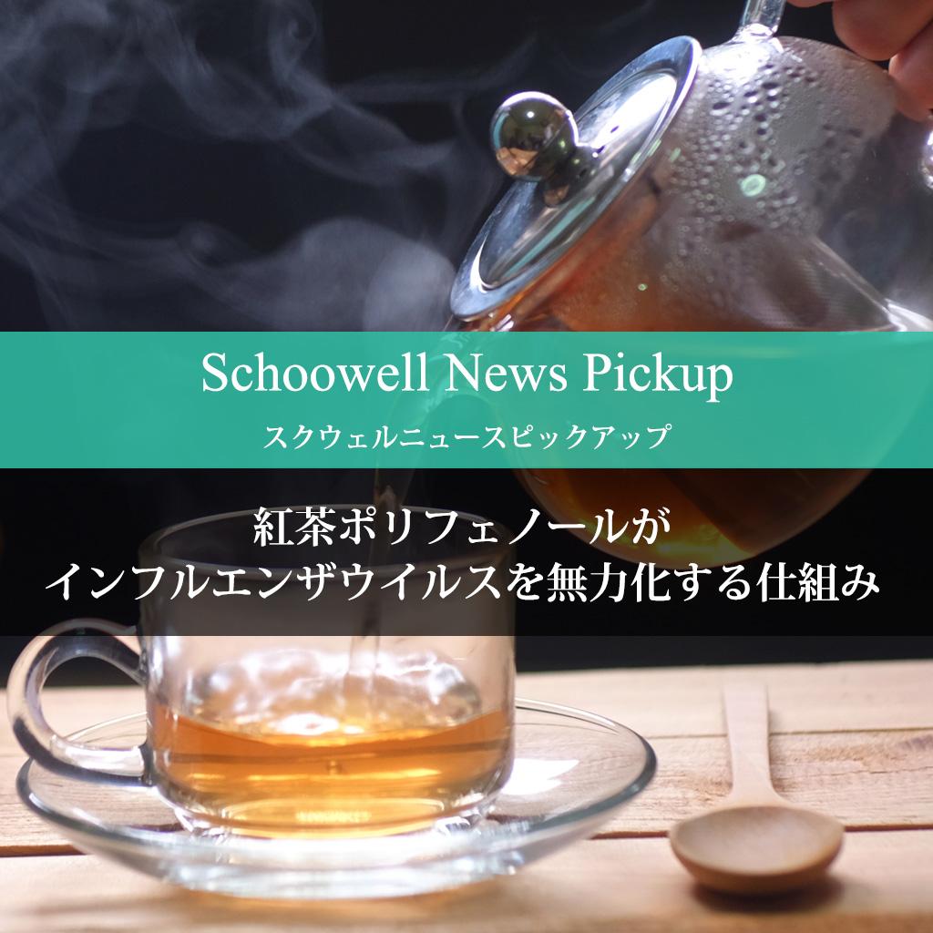 紅茶ポリフェノールがインフルエンザウイルスを無力化する仕組み