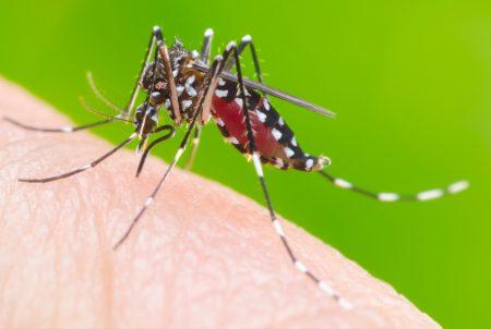 新型コロナは蚊に刺されてうつるのか?